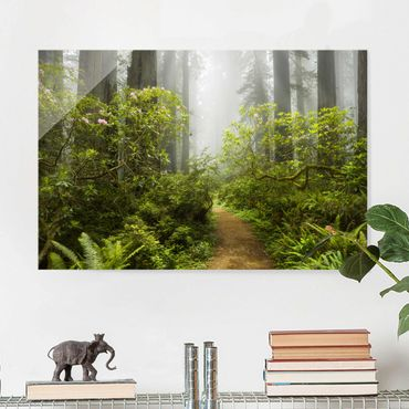 Quadro in vetro - Misty forest path - Orizzontale 3:2
