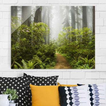 Quadro in vetro - Misty forest path - Orizzontale 4:3
