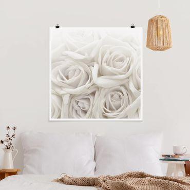 Poster - Rose bianche - Quadrato 1:1