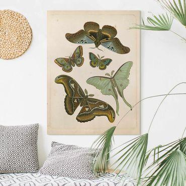Stampa su tela - Vintage Illustrazione di farfalle esotiche II - Verticale 4:3