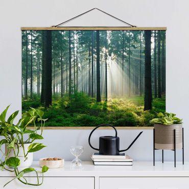 Foto su tessuto da parete con bastone - Enlightened Foresta - Orizzontale 2:3