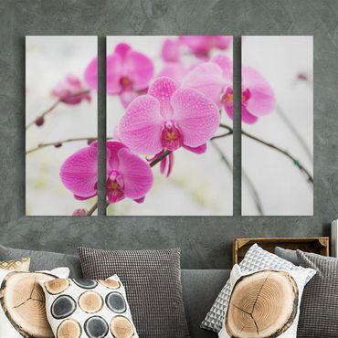 Stampa su tela 3 parti - Close Orchid - Trittico