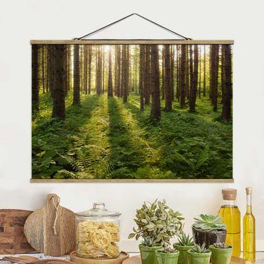Foto su tessuto da parete con bastone - Raggi di Sun nel verde della foresta - Orizzontale 2:3