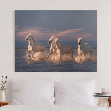 Stampa su tela - Cavalli selvaggi in Kamargue - Orizzontale 4:3