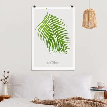 Poster - Foglia tropicale Areca Palm - Verticale 3:2
