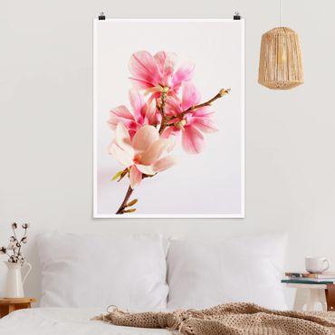Poster - fiori di magnolia - Verticale 4:3