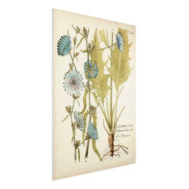 Stampa su Forex - Vintage Botanica In Blue Cicoria - Verticale 4:3