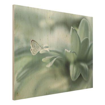 Quadro in legno - Farfalla E Gocce di rugiada In Pastel Verde - Orizzontale 4:3