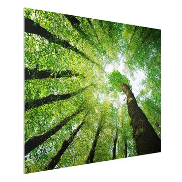 Quadro in forex - Trees Of Life - Orizzontale 4:3