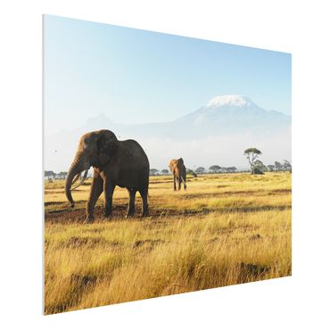 Quadro in forex - Elephants in front of the Kilimanjaro in Kenya - Orizzontale 4:3