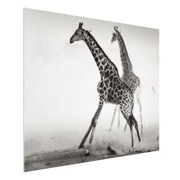 Quadro in forex - Giraffe hunting - Orizzontale 4:3