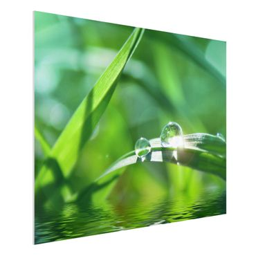 Quadro in forex - Green Ambiance II - Orizzontale 4:3