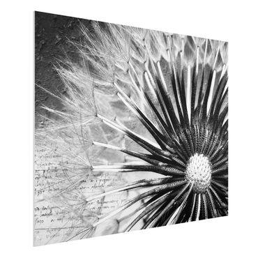 Quadro in forex - Dandelion Black & White - Orizzontale 4:3