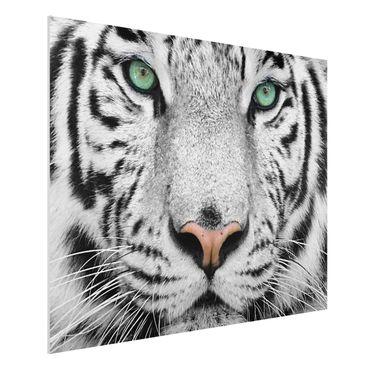 Quadro in forex - White Tiger - Orizzontale 4:3