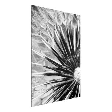 Quadro in alluminio - Dandelion Black & White