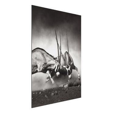 Quadro in alluminio - Feral Fight