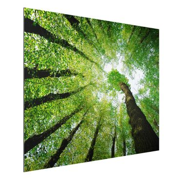 Quadro in alluminio - Trees Of Life
