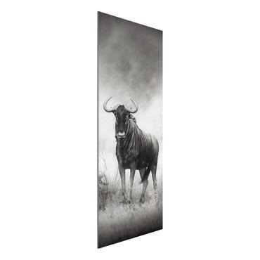 Quadro in alluminio - Staring Wildebeest