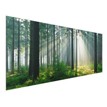 Quadro in alluminio - Enlightened Forest