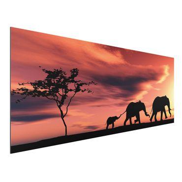 Quadro in alluminio - Savannah Elefant Family