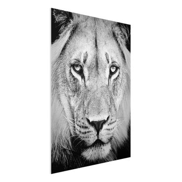 Quadro in forex - Old lion - Verticale 3:4