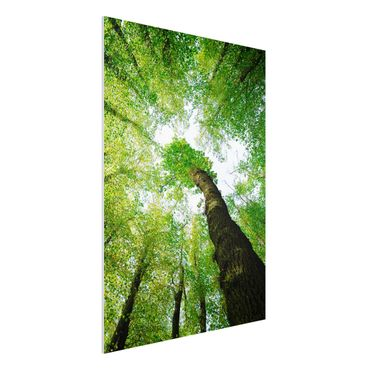 Quadro in forex - Trees Of Life - Verticale 3:4