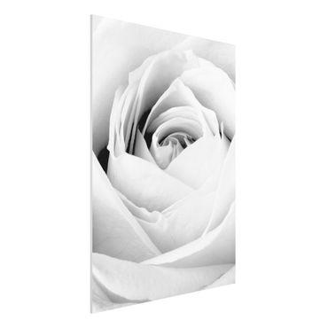 Quadro in forex - Close Up Rose - Verticale 3:4