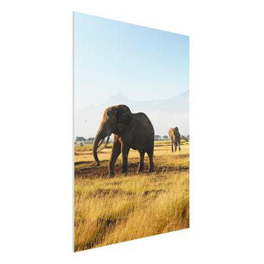 Quadro in forex - Elephants in front of the Kilimanjaro in Kenya - Verticale 3:4