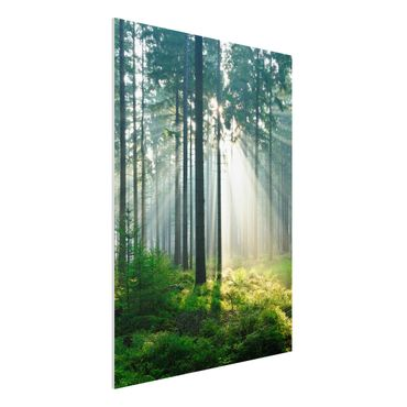 Quadro in forex - Enlightened Forest - Verticale 3:4