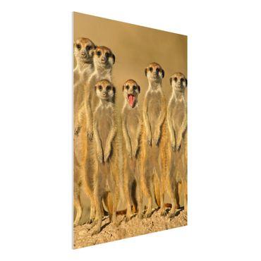 Quadro in forex - Meerkat Family - Verticale 3:4