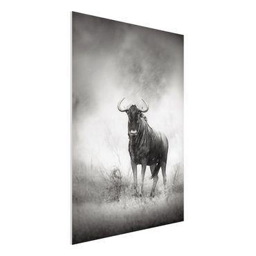 Quadro in forex - Staring Wildebeest - Verticale 3:4