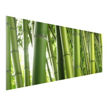 Quadro in forex - Bamboo Trees No.1 - Panoramico