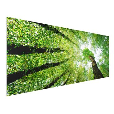 Quadro in forex - Trees Of Life - Panoramico