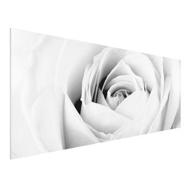 Quadro in forex - Close Up Rose - Panoramico
