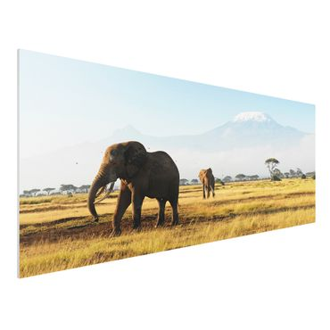 Quadro in forex - Elephants in front of the Kilimanjaro in Kenya - Panoramico