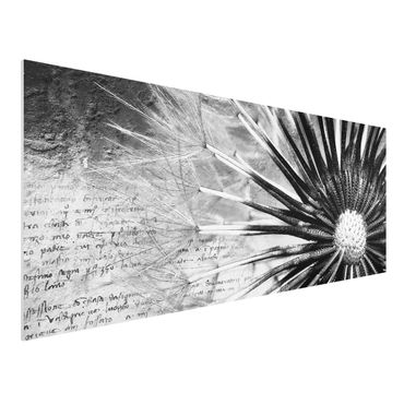 Quadro in forex - Dandelion Black & White - Panoramico