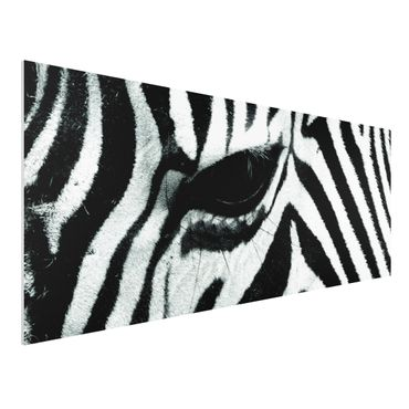 Quadro in forex - Zebra Wideing No.2 - Panoramico