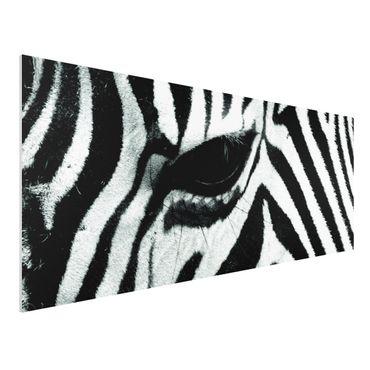 Quadro in forex - Zebra Wideing No.2 - Panoramico