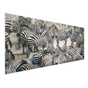 Quadro in forex - Zebra herd - Panoramico