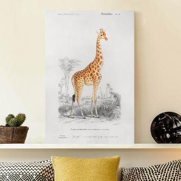 Stampa su tela - Vintage Consiglio Giraffe - Verticale 3:2