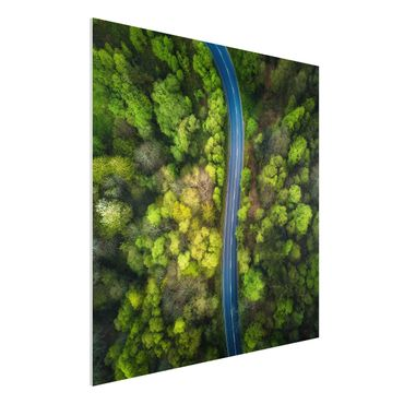 Quadro in forex - Veduta aerea - Strada asfaltata In The Forest - Quadrato 1:1