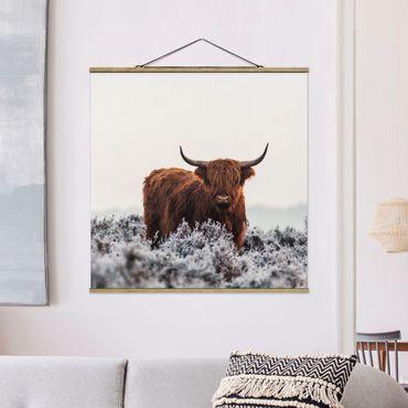 Foto su tessuto da parete con bastone - Bison nelle Highlands - Quadrato 1:1