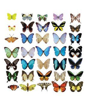 Adesivi da finestra no.51 Butterflies Set II