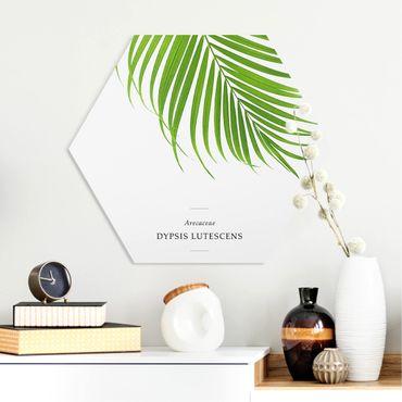 Esagono in forex - Foglia tropicale Areca Palm