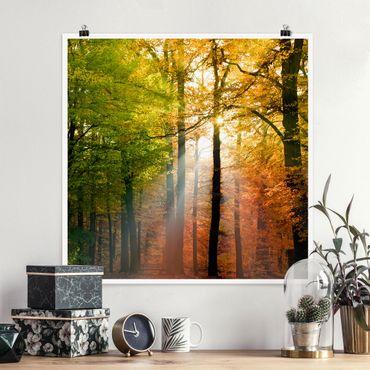 Poster - Morning Light - Quadrato 1:1