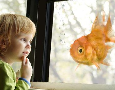 Decorazione per finestre Goldfish