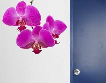 Adesivo murale no.175 Orchid Pink