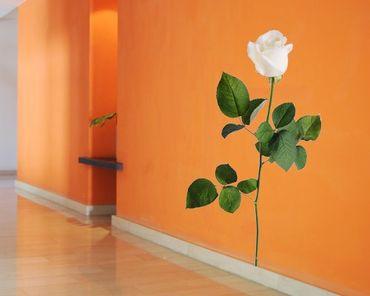 Adesivo murale no.SB54 White Rose