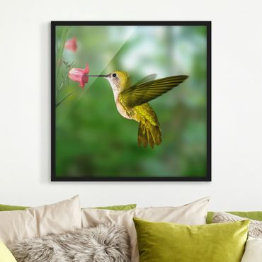 Poster con cornice - Hummingbird And Blossom - Quadrato 1:1