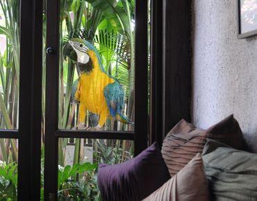 Adesivi da finestra no.134 macaw